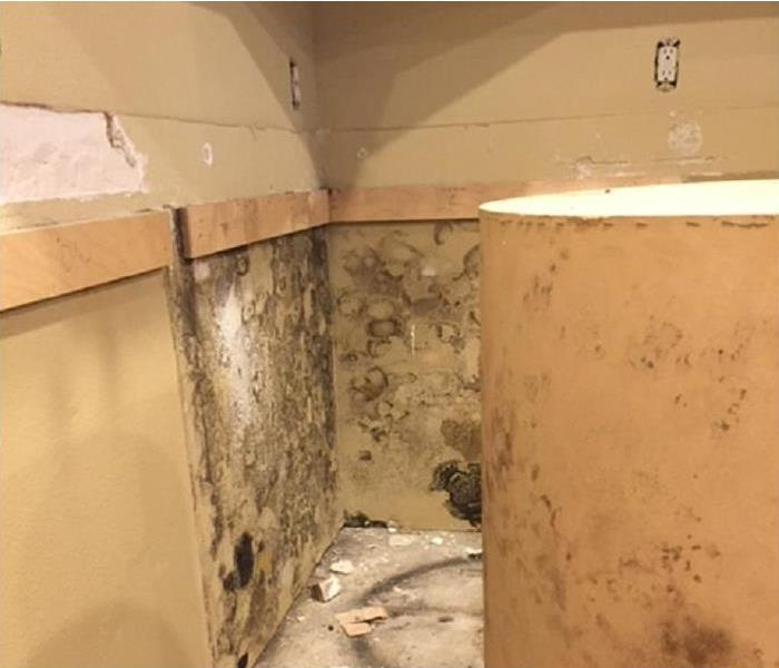 Why SERVPRO Why Is My Mold Back? 3 Things You're Doing Wrong